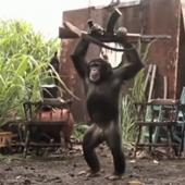opičák se zbraní