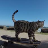 kočka na skateboardu
